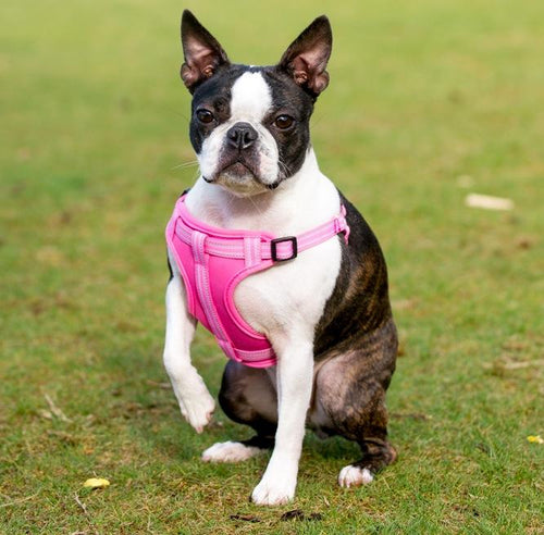 Comfort Harness Pink-Pets-HOUSE of BOTTA