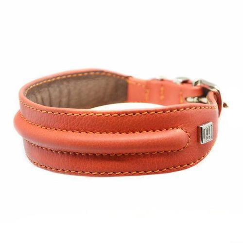 D&H Horizon Hound Collar Orange-Pets-HOUSE of BOTTA