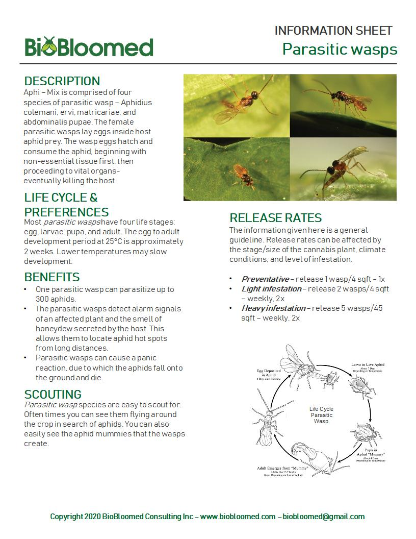 Information Sheet for Cannabis Pest Control with Parasitic Wasps