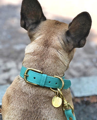 Cascade Green Collar