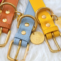 Brown pastel blue, yellow dog collars