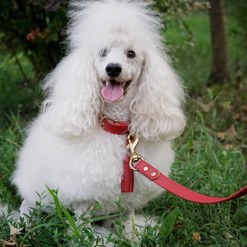 products/red-dog-collar-high-end_fbac77f1-b946-4885-84f7-ec3a0ca77eb3.jpg