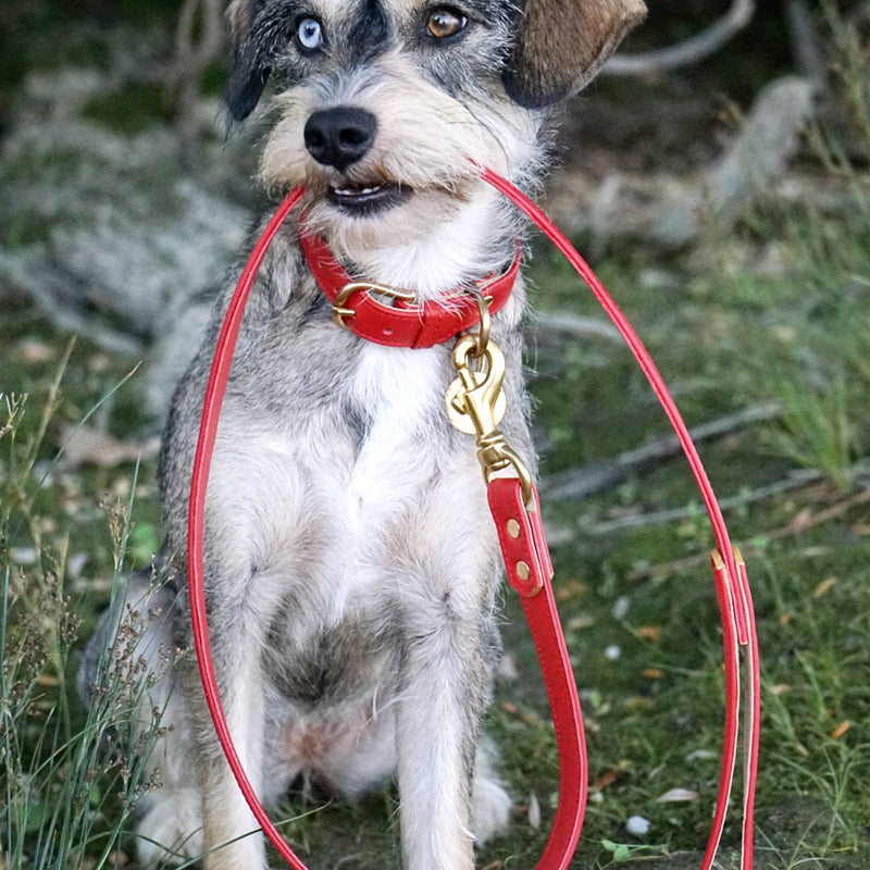 products/red-dog-collars-leashes_1c7e50be-ae1c-4254-b4ba-9cb5ef8da7c0.jpg