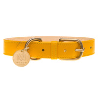 Yellow dog collar with pet ID