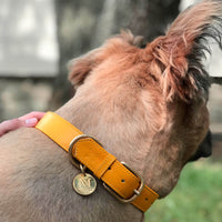 Yellow dog collars with pet ID