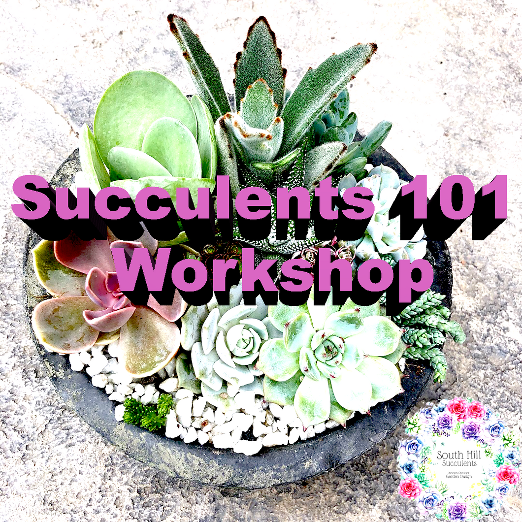 Succulents 101 Workshop - Thurs. May 24th @ 1-3pm