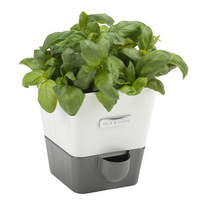Cole & Mason Self-Watering Single Potted Herb Keeper