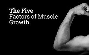 The 5 Factors of Muscle Growth