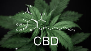 A Quick Chat About CBD