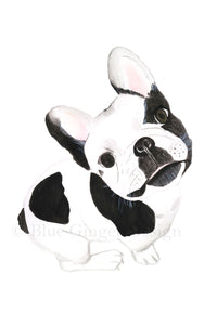 Frenchie A4