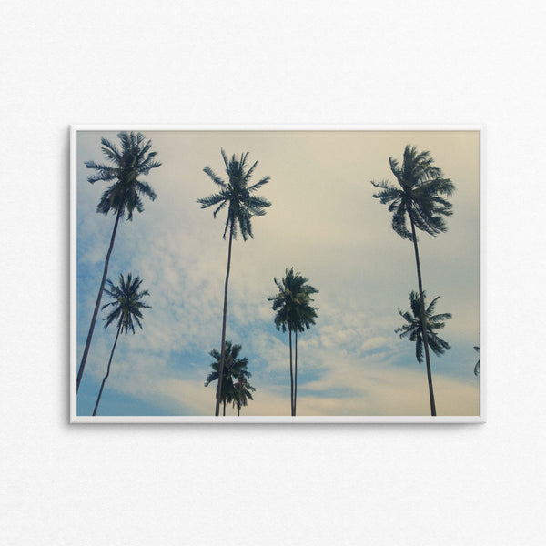 Tropical Palms A3