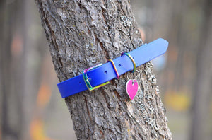 Royal Blue Proof Collar - N.G. Collars