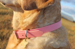 Baby Pink Proof Collar - N.G. Collars