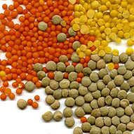 Lentil Seed Extract