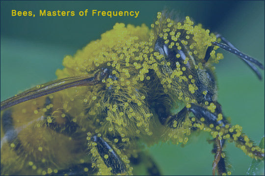 Bees, Masters of Frequency