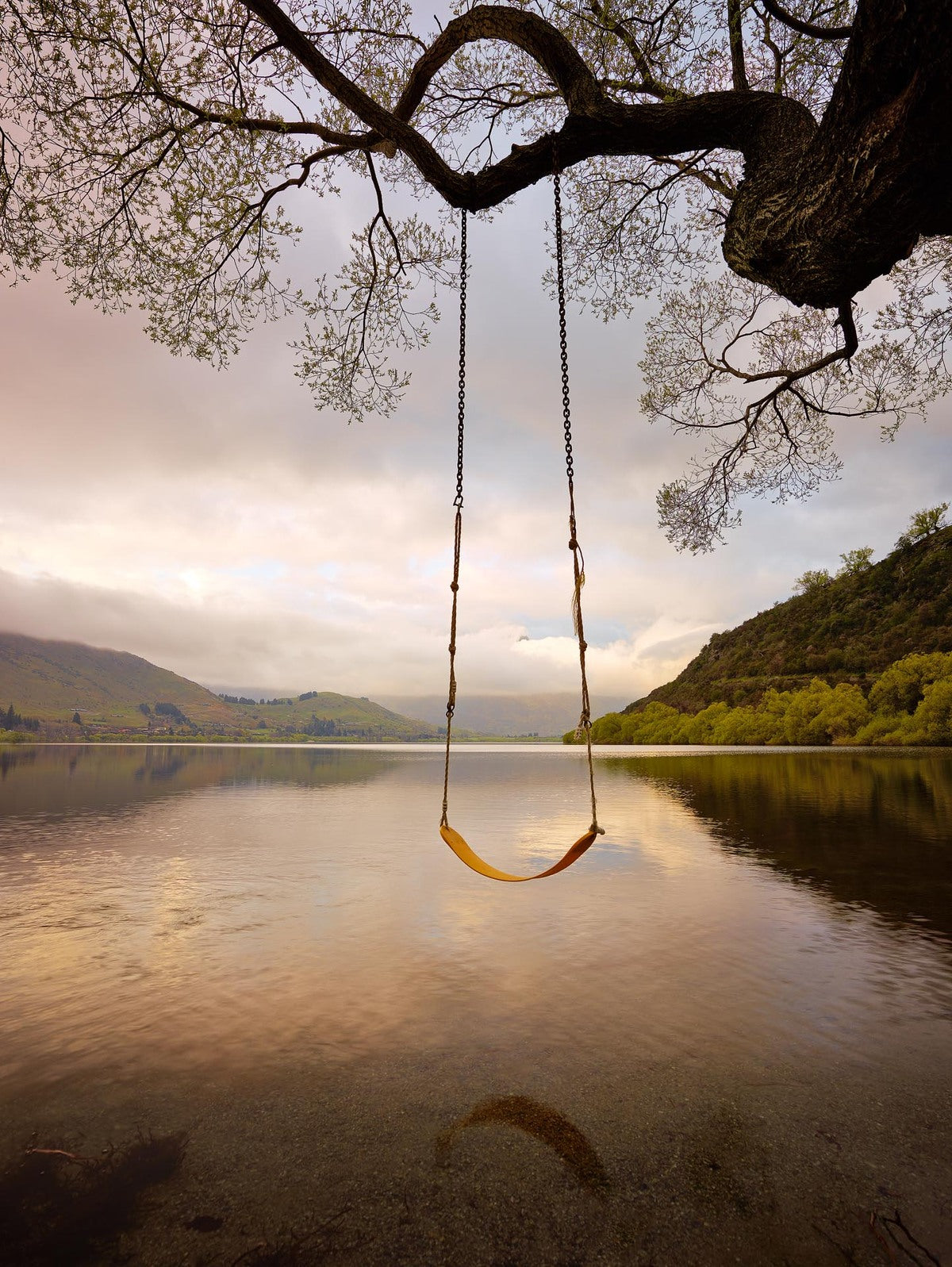 Tree swing over Lake Hayes in New Zealand at sunrise, South Island.