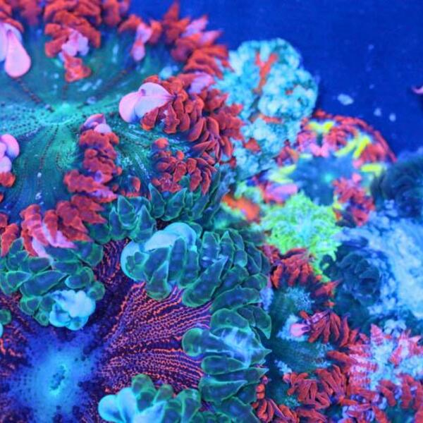 Ultra Rock Flower Anemone Our Pick